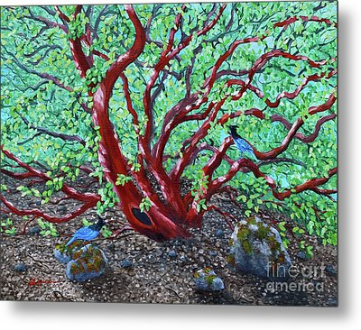 Morning Manzanita Metal Print by Laura Iverson