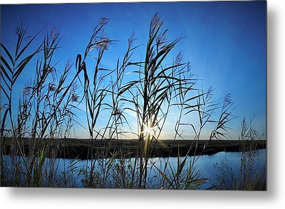 Good Day Sunshine Metal Print by John  Glass