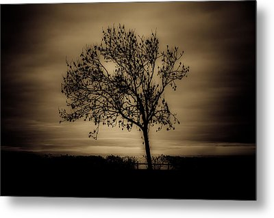 Morning Silhouette Metal Print by Chris Fletcher