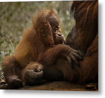 Mother's Love Metal Print by C.s.tjandra