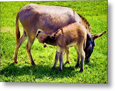Mother's Milk Metal Print by Jan Amiss Photography