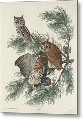 Mottled Owl Metal Print by John James Audubon