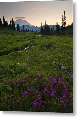 Mountain Heather Sunset Metal Print by Mike  Dawson