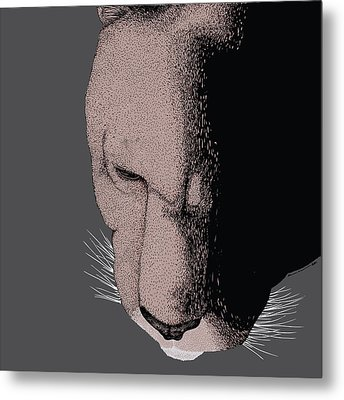 Mountain Lion Metal Print by Karl Addison
