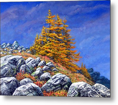 Mountain Tamaracks Metal Print by Frank Wilson