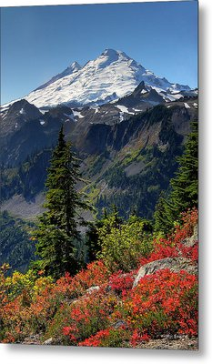 Mt. Baker Autumn Metal Print by Winston Rockwell