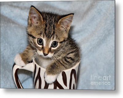 Mug Kitten Metal Print by Teresa Zieba