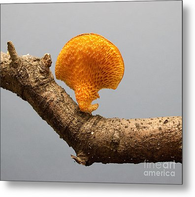 Mushroom Metal Print by Robert Sander