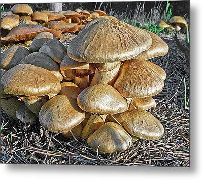Mushrooms Metal Print by Lynn Andrews