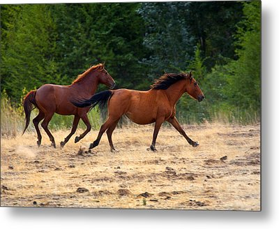 Mustang Gallop Metal Print by Mike  Dawson