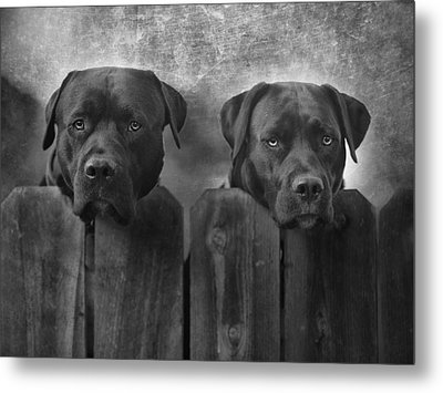 Mutt And Jeff Metal Print by Larry Marshall