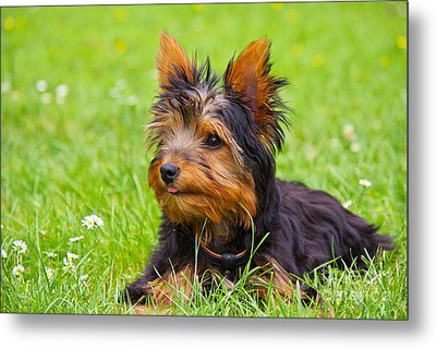 My Little Dog Metal Print by Angela Doelling AD DESIGN Photo and PhotoArt