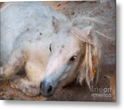 My Little Horse Metal Print by Angela Doelling AD DESIGN Photo and PhotoArt