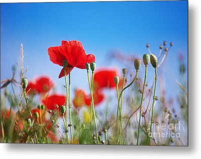 My Summertime Metal Print by Angela Doelling AD DESIGN Photo and PhotoArt