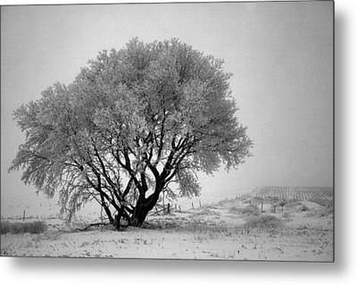 Mystical Morning Metal Print by Julie Lueders