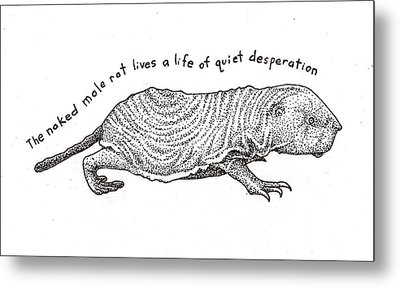 Naked Mole Rat Metal Print by Christy Beckwith