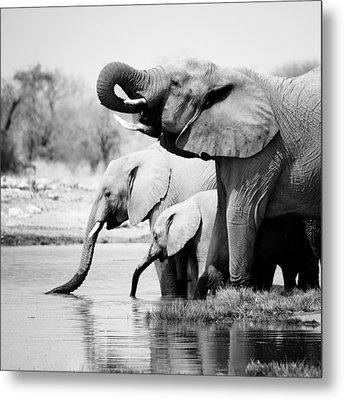 Namibia Elephants Metal Print by Nina Papiorek
