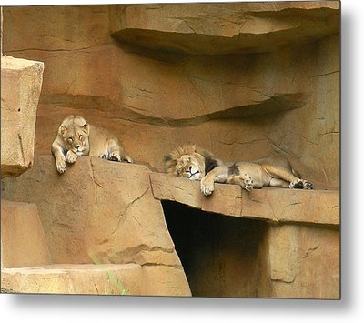 Nap Time Metal Print by Leeann Stumpf