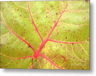 Nature Abstract Sea Grape Leaf Metal Print by Carol Groenen