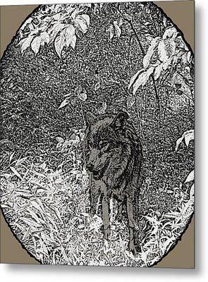 Nature Walk Wolf Metal Print by Debra     Vatalaro