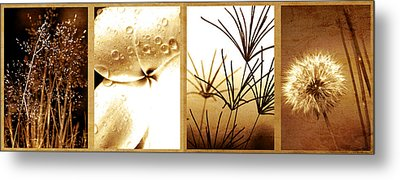 Nature's Window Metal Print by Holly Kempe