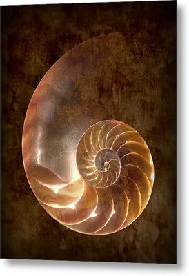 Nautilus Metal Print by Tom Mc Nemar