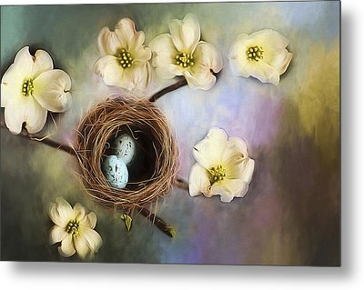 Nesting Among The Dogwoods Metal Print by Darren Fisher