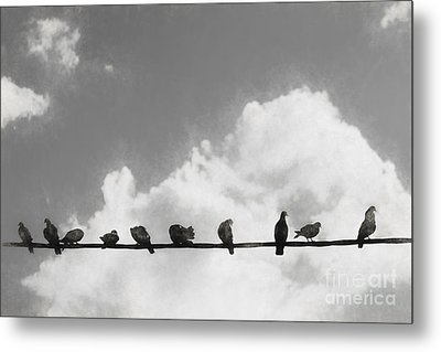 Network Of The Bird Line  Metal Print by Jorgo Photography - Wall Art Gallery