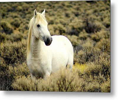 Nevada Wild Horses 3 Metal Print by Marty Koch