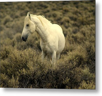 Nevada Wild Horses 4 Metal Print by Marty Koch