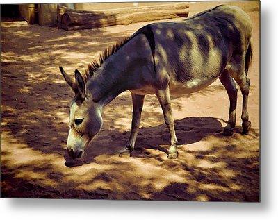 Nigerian Donkey Metal Print by Jan Amiss Photography