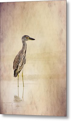 Night Heron 3 By Darrell Hutto Metal Print by J Darrell Hutto