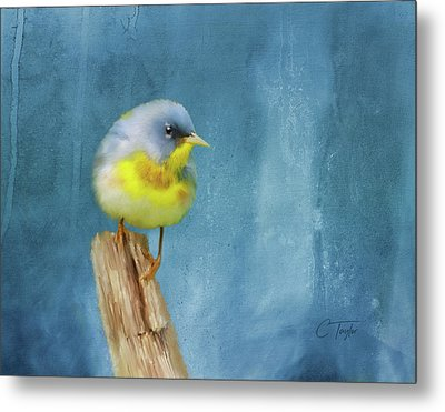Northern Blue Song Bird Metal Print by Colleen Taylor