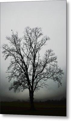 November Tree In Fog Metal Print by Patricia Motley