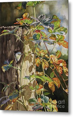 Nuthatch And Creeper Metal Print by Greg and Linda Halom