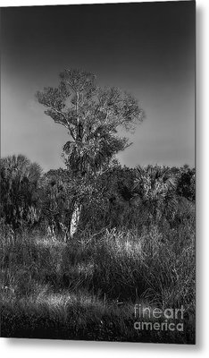 Oak And Palm Metal Print by Marvin Spates