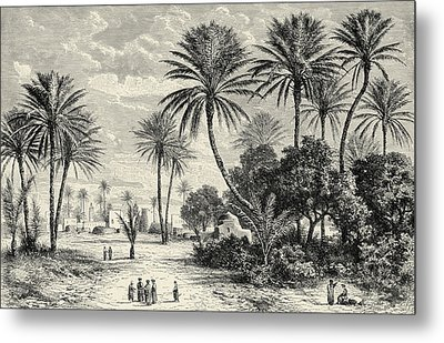 Oasis Of Gafsa  Tunis Metal Print by Charles Brabant
