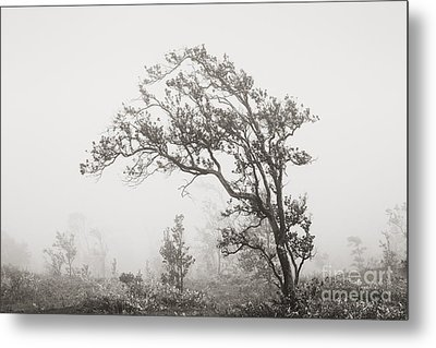 Ohia Lehua Tree Metal Print by Greg Vaughn - Printscapes