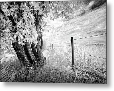 Old Cedar And Barbed Wire Metal Print by Dan Jurak