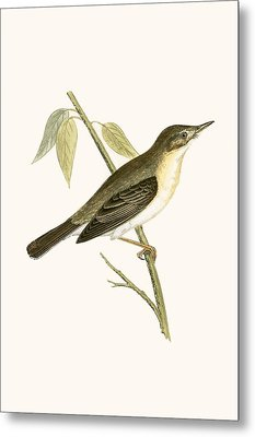 Olivaceous Warbler Metal Print by English School