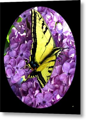 On Bended Wing Metal Print by Will Borden