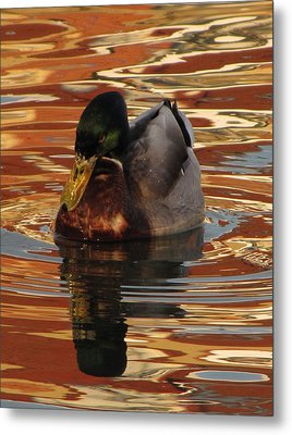 On Golden Pond Metal Print by Jennifer Wheatley Wolf