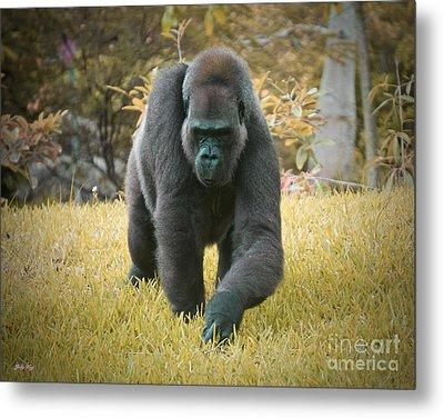 On The Prowl Metal Print by Judy Kay