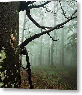 One Day Of The Snail's Life Metal Print by Evgeni Dinev