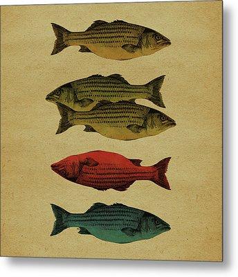 One Fish, Two Fish . . . Metal Print by Meg Shearer