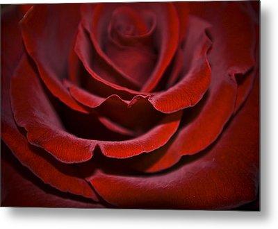 One Red Rose Metal Print by Svetlana Sewell