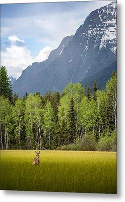 Open Spaces // Glacier National Park  Metal Print by Nicholas Parker
