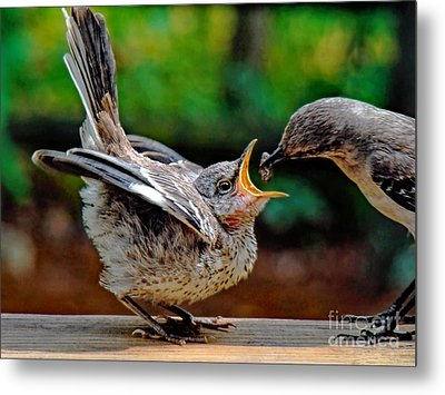 Open Wide Metal Print by Sue Melvin