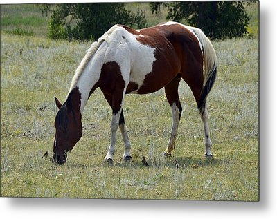 Opposites In Harmony Metal Print by Ken Smith
