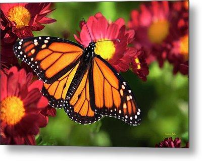 Orange Drift Monarch Butterfly Metal Print by Christina Rollo